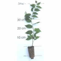 310, 30-40 cm
