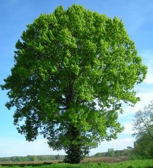 vert f ret vente en gros d 39 arbres et d 39 arbustes accueil. Black Bedroom Furniture Sets. Home Design Ideas